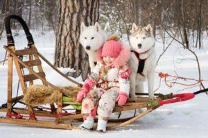 activité enfant montagne chiens de traineau